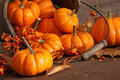 Small pumpkins with wood bucket Royalty Free Stock Photo