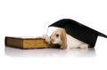 Small rabbit with book and cap Royalty Free Stock Image