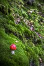 Small ref toadstool Royalty Free Stock Photography