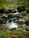 Small river cascade view on the between stones in forest Royalty Free Stock Photography