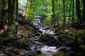 Small river in a forest mountain under shadows Royalty Free Stock Images
