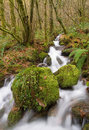 Small river in fragas do eume the forest galicia spain Stock Photos