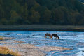 A small river on the grassland a leisurely grass china horses in grazing quiet harmony Stock Image