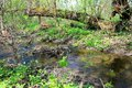 Small river on spring Royalty Free Stock Photo