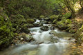 Small river with stream in the forest Royalty Free Stock Photo