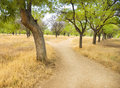 Small road to the park forking divergently Royalty Free Stock Image