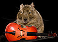 Small rodent with cello little full size front view on black background Royalty Free Stock Images