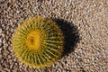 Small Round Cactus in Gravel Royalty Free Stock Photography