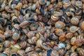 Small sea snails at market still alive