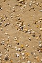 Small seashells Stock Photos