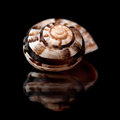 Small seasnail shell isolated on black Stock Photo