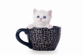 Small silver british kitten in cup Stock Photography