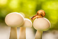 Small snail on mushrooms fall a Royalty Free Stock Photo