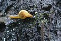 A small snail Royalty Free Stock Photo