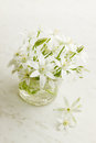 Small spring flowers white delicate on white board Royalty Free Stock Image