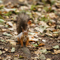 Small squirell in the park autumn portrait Stock Photo