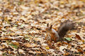 Small squirell in the park autumn portrait Stock Photography
