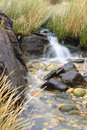 Small stream Stock Photography