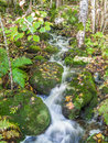 Small stream in autumn forest Royalty Free Stock Image
