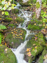 Small stream in autumn forest Royalty Free Stock Images