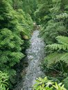 Small stream in dense vegetation at sao miguel island the biggest island of the azores archipelago a group of vulcanic islands Royalty Free Stock Image