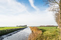 Small stream in a flat polder landscape dutch the autumn season with straight the center and bare elm trees on the side Royalty Free Stock Image