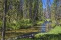 Small stream in Idaho mountains Royalty Free Stock Photo