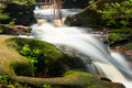 Small stream in jungle Royalty Free Stock Photo
