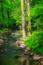 Small stream with stones in the old forest and fallen trees green Royalty Free Stock Photo