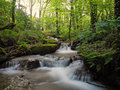 Small stream in woodland rose craddoc woods cornwall uk Royalty Free Stock Photo