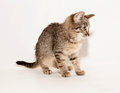 Small tabby kitten goes on gray background Stock Photography