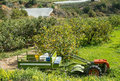 Small tiller with trailer in a lemon plantation Stock Images