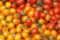 Small tomatoes Stock Photography