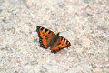 Small tortoiseshell butterfly on the ground Royalty Free Stock Image