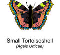 Small Tortoiseshell Butterfy Royalty Free Stock Images