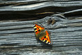 Small tortoiseshell (nymphalis) on log wall Royalty Free Stock Photography