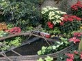 A small train that shuttles through the flowers in the flower house Royalty Free Stock Photo
