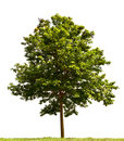 Malé strom