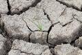 Small tree in crack soil