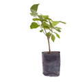 Small tree in planting bag Royalty Free Stock Photo