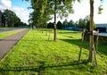 Small trees Stock Photos