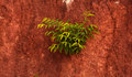 Small trees grown on ground floor Royalty Free Stock Photos