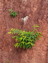 Small trees grown on ground floor Stock Photography