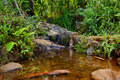 Small tropical river or stream Royalty Free Stock Photo