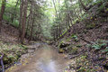 A small Trout Stream. Royalty Free Stock Photo