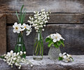 Small vases and bottles with lilies, daffodils Royalty Free Stock Photo