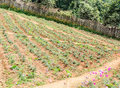 Small vegetable farm Stock Photo