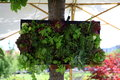 Small vertical garden a hanging from a tree for demonstration Royalty Free Stock Images