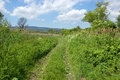 Small walkway through field bypath lined with high grass Royalty Free Stock Photos
