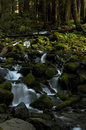 Small waterfall in the Forest, Washington state Royalty Free Stock Photo